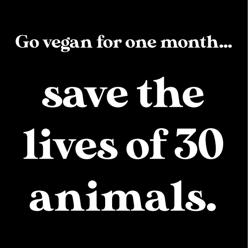 new to plant-based eating save animals