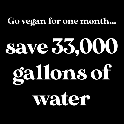 new to plant-based eating save water